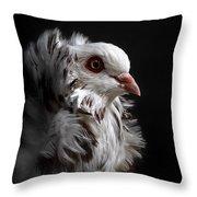 Capuchin Pigeon Throw Pillow
