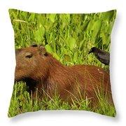 Capybara And Smooth Billed Ani Throw Pillow