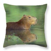 Capybara Wading Pantanal Brazil Throw Pillow