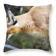 Caracal About To Jump Throw Pillow