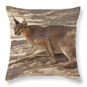 Caracal Caracal Caracal Throw Pillow