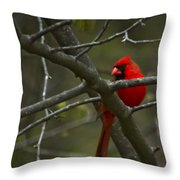 Cardinal   #5032 Throw Pillow