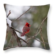 Cardinal - A Winter Bird Throw Pillow