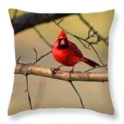 Cardinal Beauty Throw Pillow