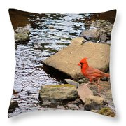 Cardinal By The Creek Throw Pillow