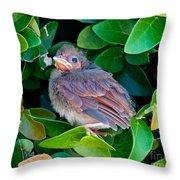 Cardinal Chick Throw Pillow