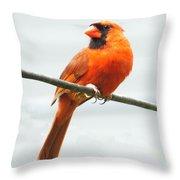 Cardinal I Throw Pillow