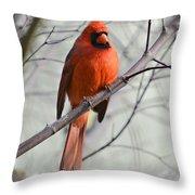 Cardinal In A Tree Throw Pillow by Susan Leggett