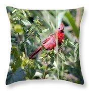 Cardinal In Bush I Throw Pillow