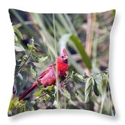Cardinal In Bush Iv Throw Pillow