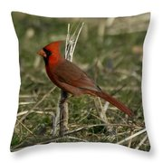 Cardinal In The Field Throw Pillow