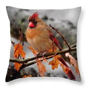 Cardinal In The Rain Throw Pillow