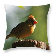 Cardinal Light Throw Pillow