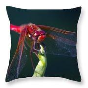 Cardinal Meadowhawk Dragonfly Throw Pillow
