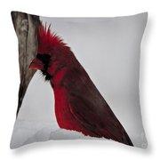 Cardinal 1 Throw Pillow