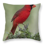 Cardinal On Tree Throw Pillow