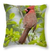Cardinal Pictures 123 Throw Pillow
