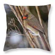 Cardinal Pictures 50 Throw Pillow
