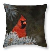 Cardinal Pictures 84 Throw Pillow