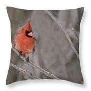 Cardinal Pictures 97 Throw Pillow