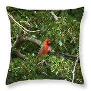 Cardinal Posing Throw Pillow