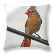 Cardinal Young Female Throw Pillow