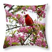 Cardinally Beautiful Throw Pillow