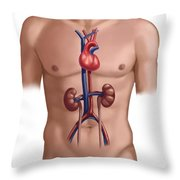 Cardiovascular And Renal Systems Throw Pillow