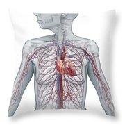 Cardiovascular System Female Throw Pillow