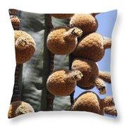 Cardon Cactus Fruit Throw Pillow