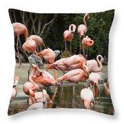 Caribbean Flamingos - Phoenicopterus Ruber Ruber Throw Pillow