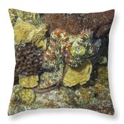 Caribbean Reef Octopus IIi Throw Pillow
