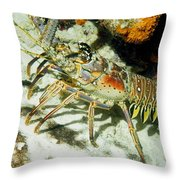 Caribbean Spiny Reef Lobster  Throw Pillow