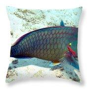 Caribbean Stoplight Parrot Fish In Rainbow Colors Throw Pillow