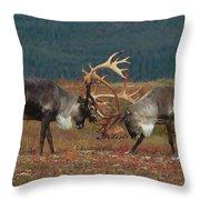 Caribou Males Sparring Throw Pillow by Matthias Breiter