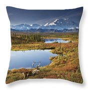 Caribou On Tundra In Denali Throw Pillow