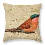 Carmine Colors Throw Pillow