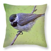 Carolina Chickadee On Angled Perch Throw Pillow