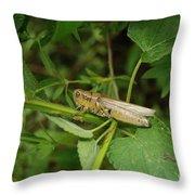 Carolina Locust Throw Pillow