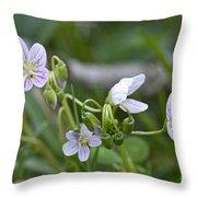 Carolina Spring Beauty - Wide-leaved Spring Beauty - Claytonia Caroliniana Throw Pillow