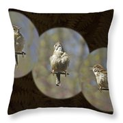 Carolina Wren - Thryothorus Ludovicianus Throw Pillow