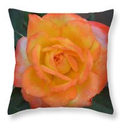 Caroty Splendor - Rose Throw Pillow