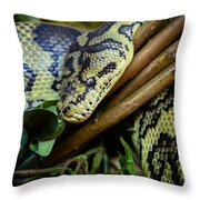 Carpet Python  Throw Pillow