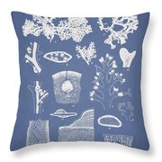 Carpopeltis Rigida Throw Pillow by Aged Pixel