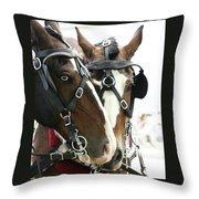 Carriage Horse - 4 Throw Pillow