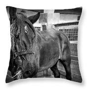 Carriage Horse Throw Pillow