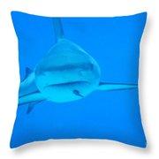 Carribean Reef Shark Seeks Dinner Throw Pillow