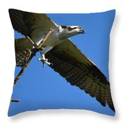 Carrying A Nest For A Living Throw Pillow