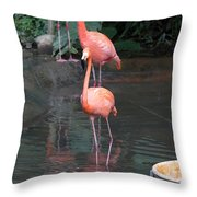 Cartoon - A Flamingo In The Small Lake In Their Exhibit In The Jurong Bird Park Throw Pillow