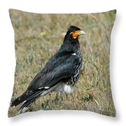 Carunculated Caracara Throw Pillow